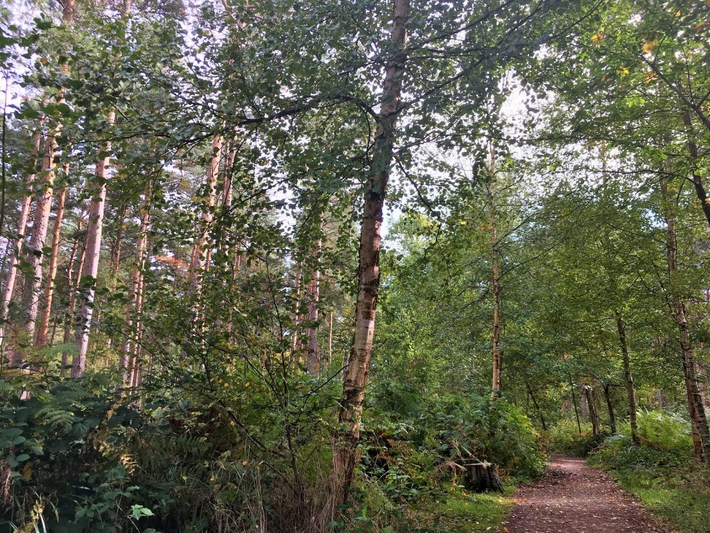 Broxbourne Woods
